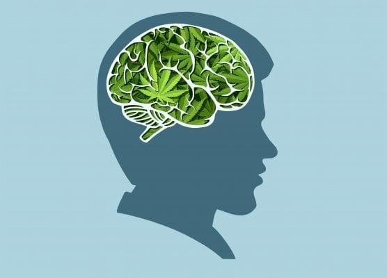 تأثير الحشيش علي المخ